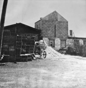 first-nitterhouse-plant